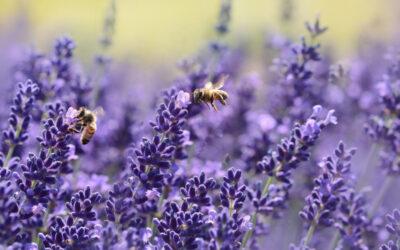 Wie ich auf die Bienen kam